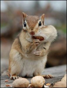 I'm sorry... was this nut yours?  I didn't realize...