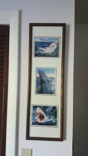 shark nature